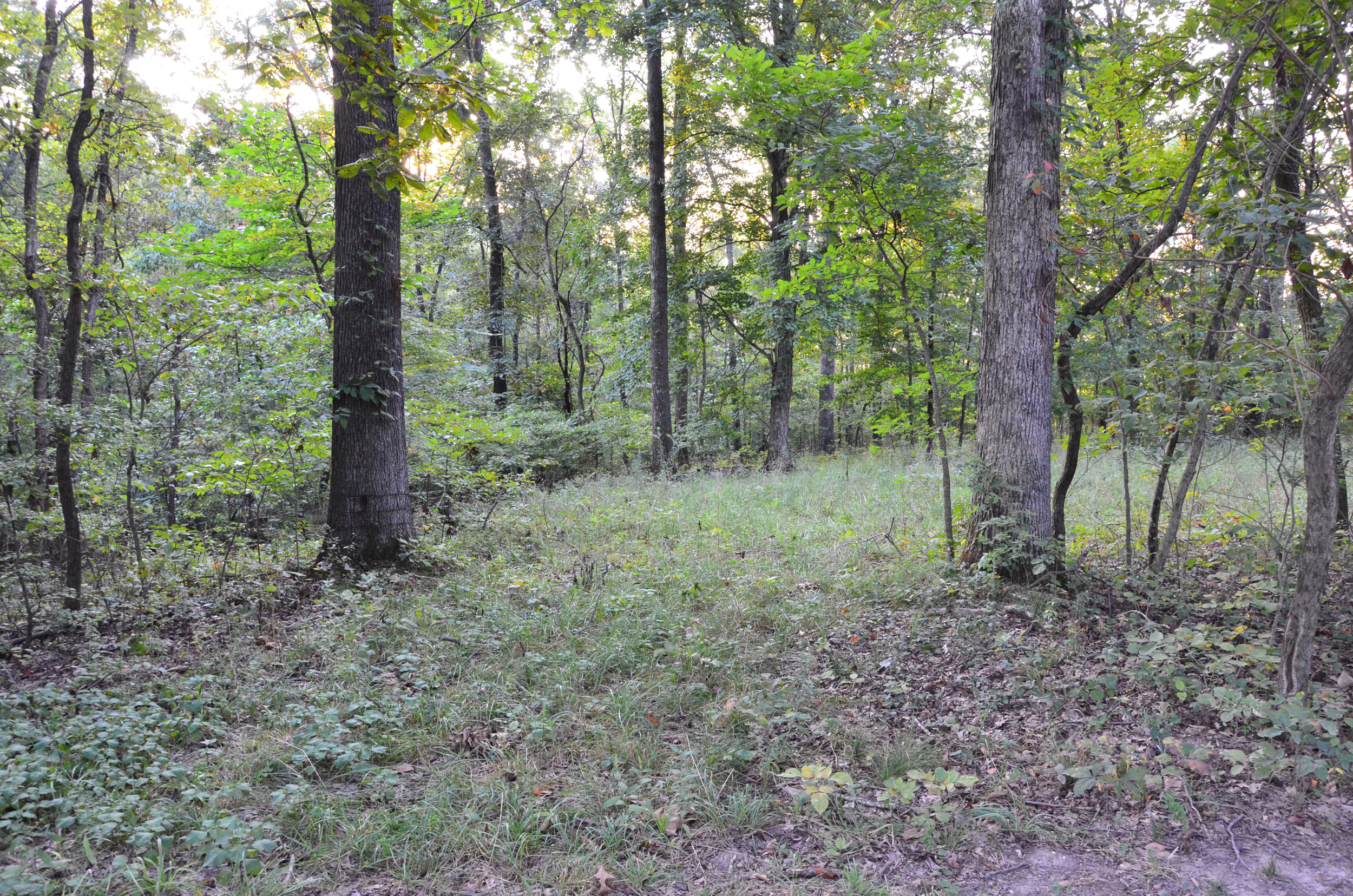 Perry Co MO240 Tract 1 1328