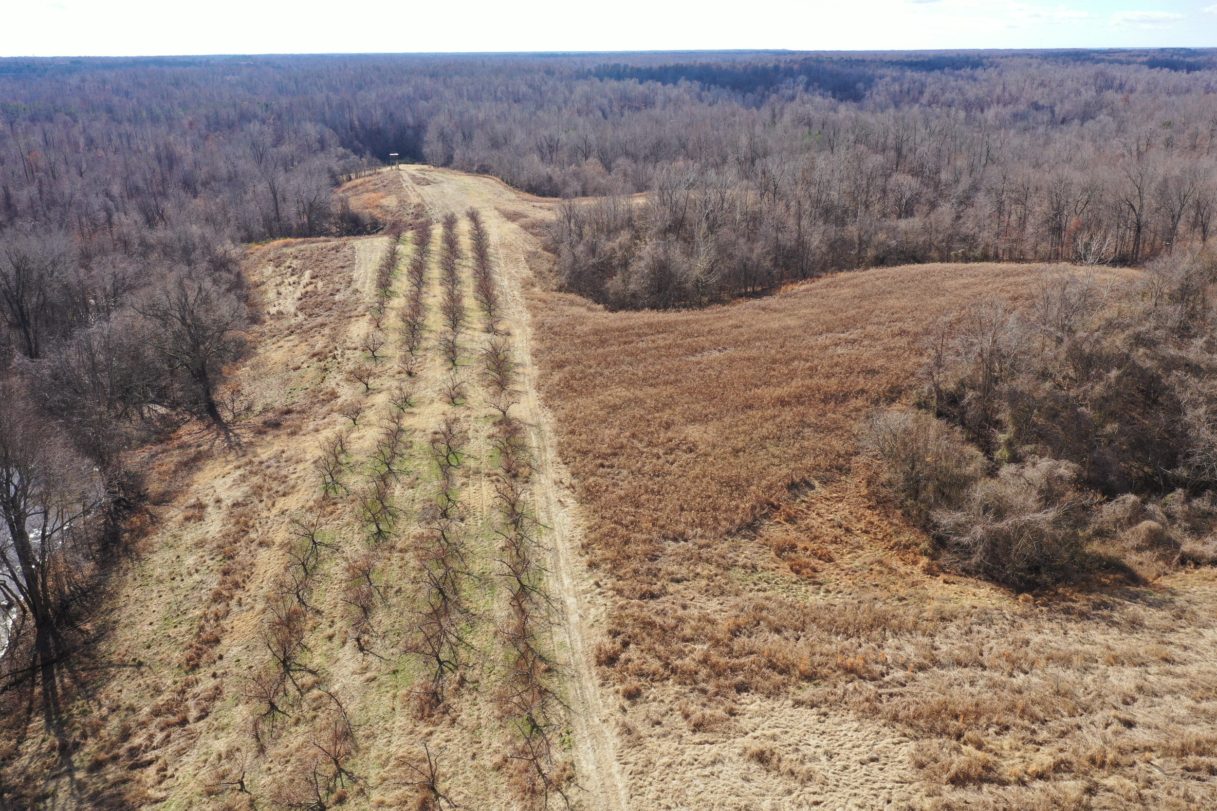 Obion TN TRACT 3 0334