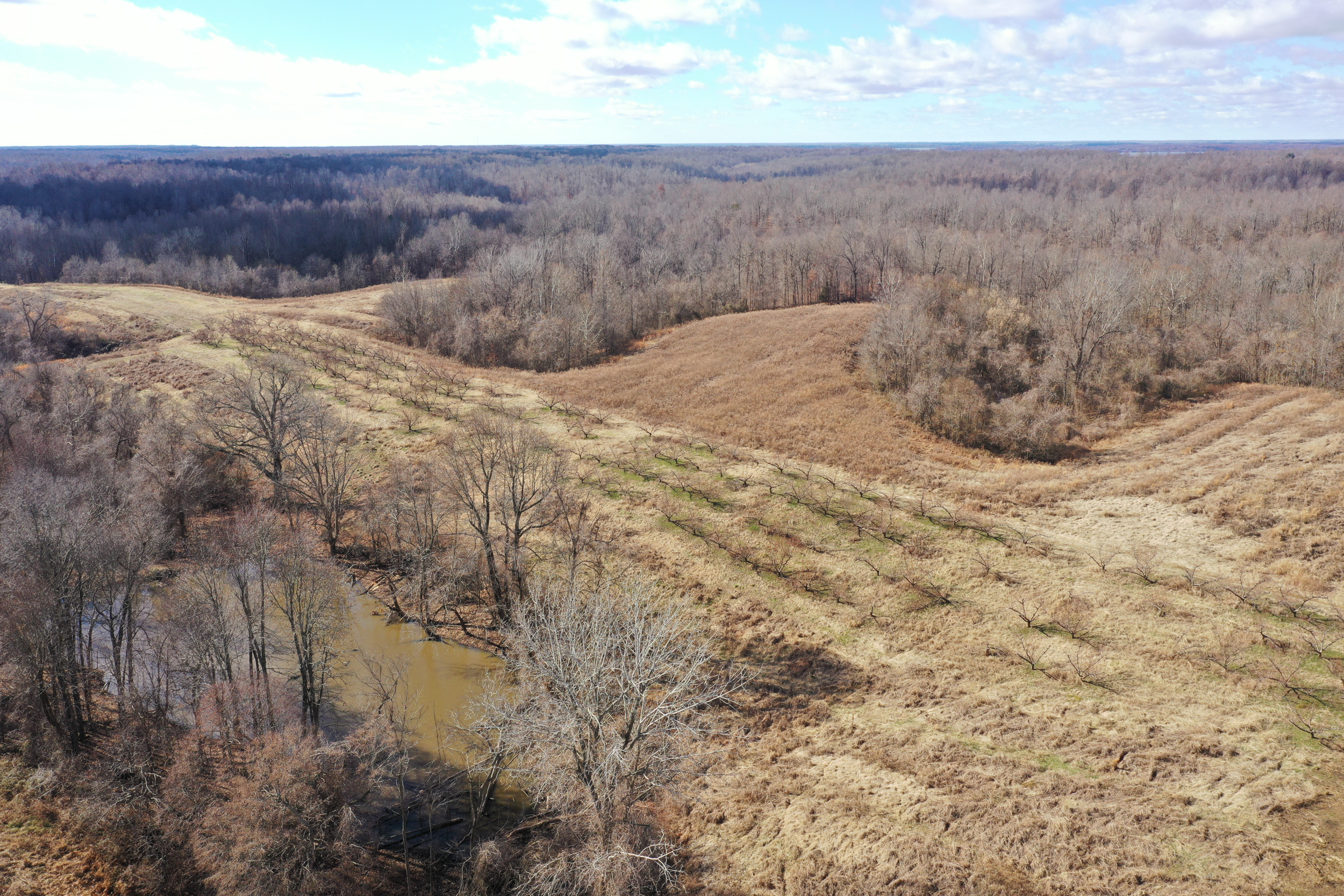 Obion TN TRACT 3 0336