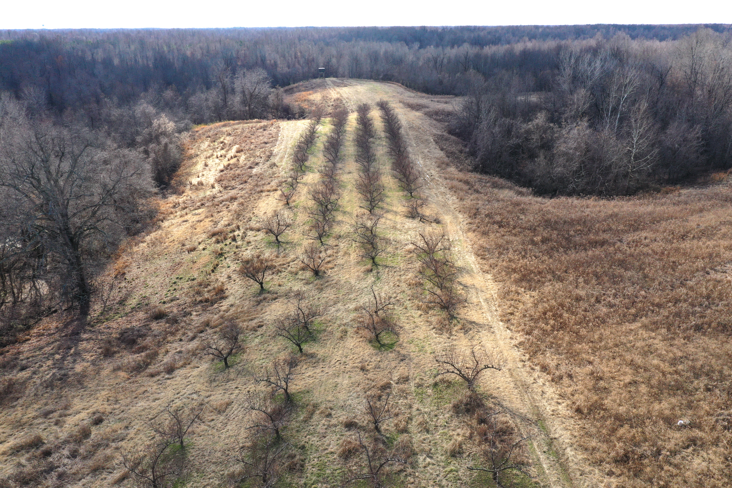 Obion TN TRACT 3 0339