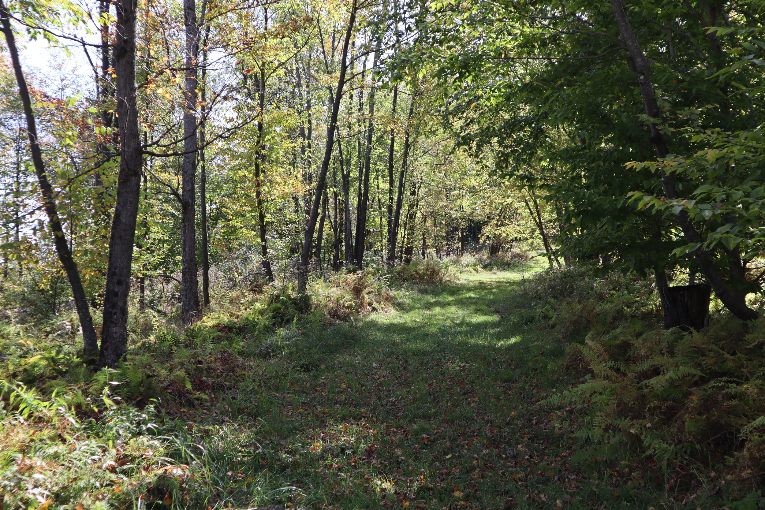 Tract 2 Food plot corner road IMG 0092