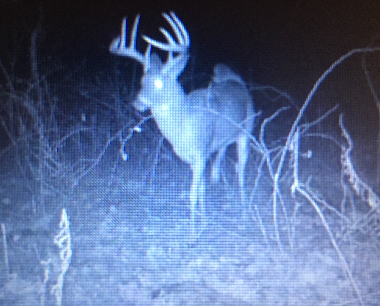Lewis KY Trail Cam 6