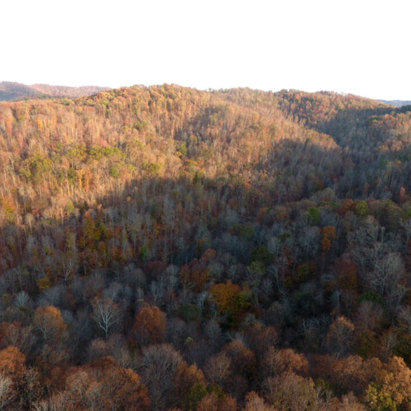 Mostly Wooded Property With Excellent Habitat In Northern Kentucky