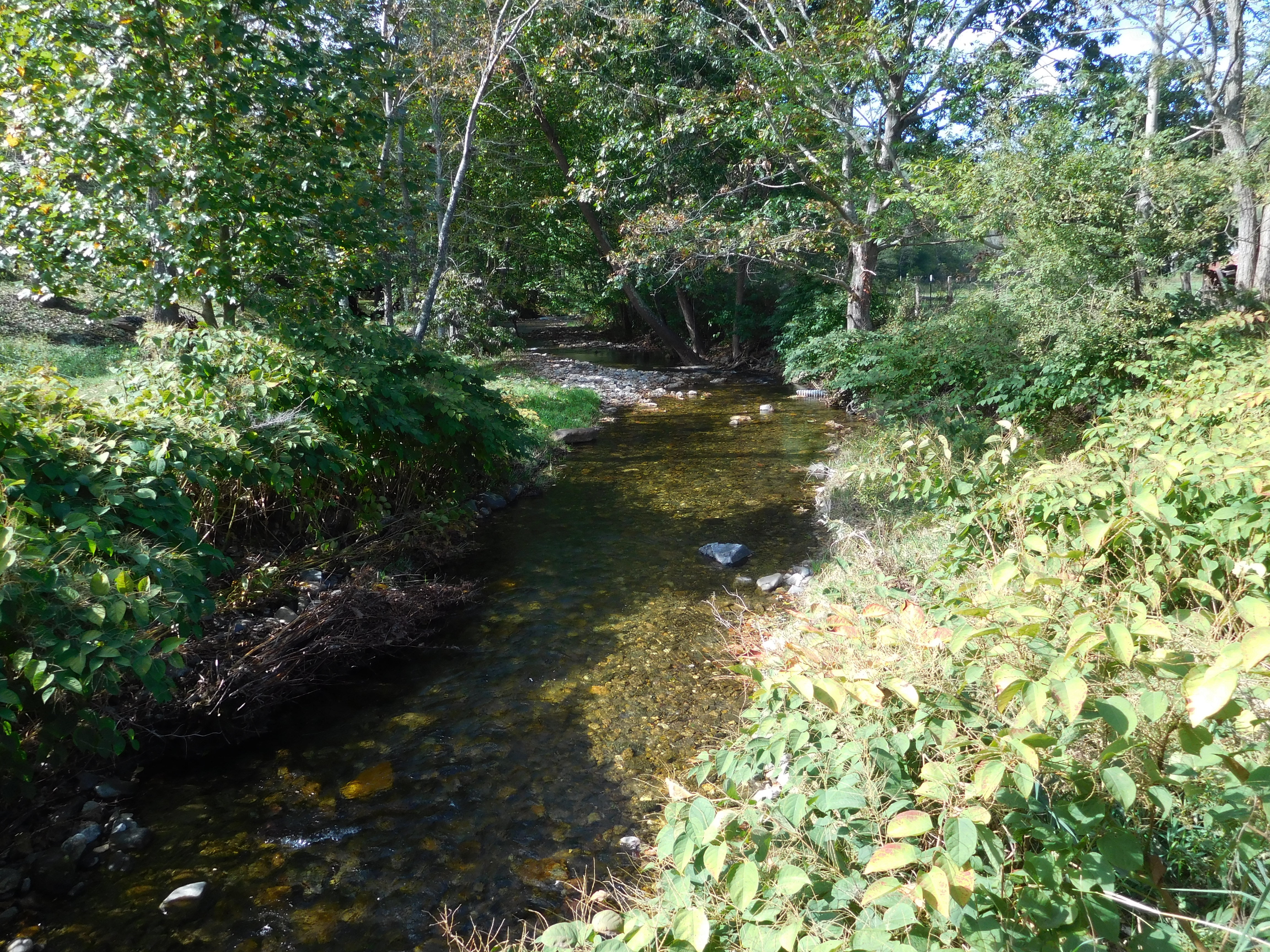 Yancey NC159_006-Mountain-trout-stream-on-the-property