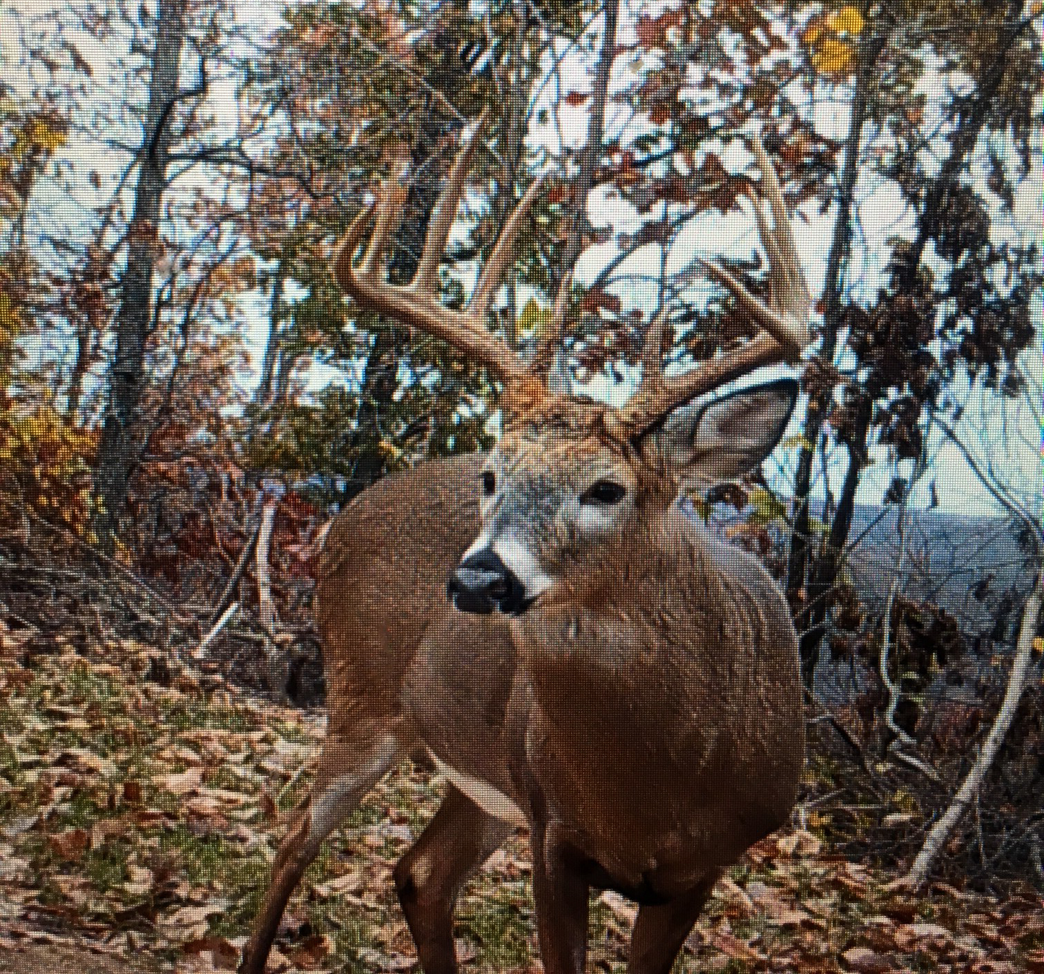 Lewis KY Trail Cam 9