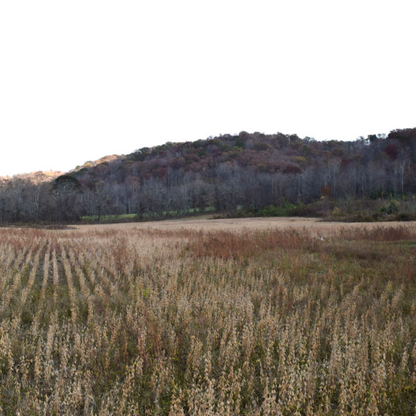 Northern KY Hunting Land With Big Buck History