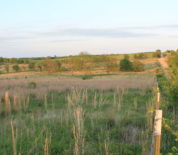 Pasture And Timber Tract With Good Access