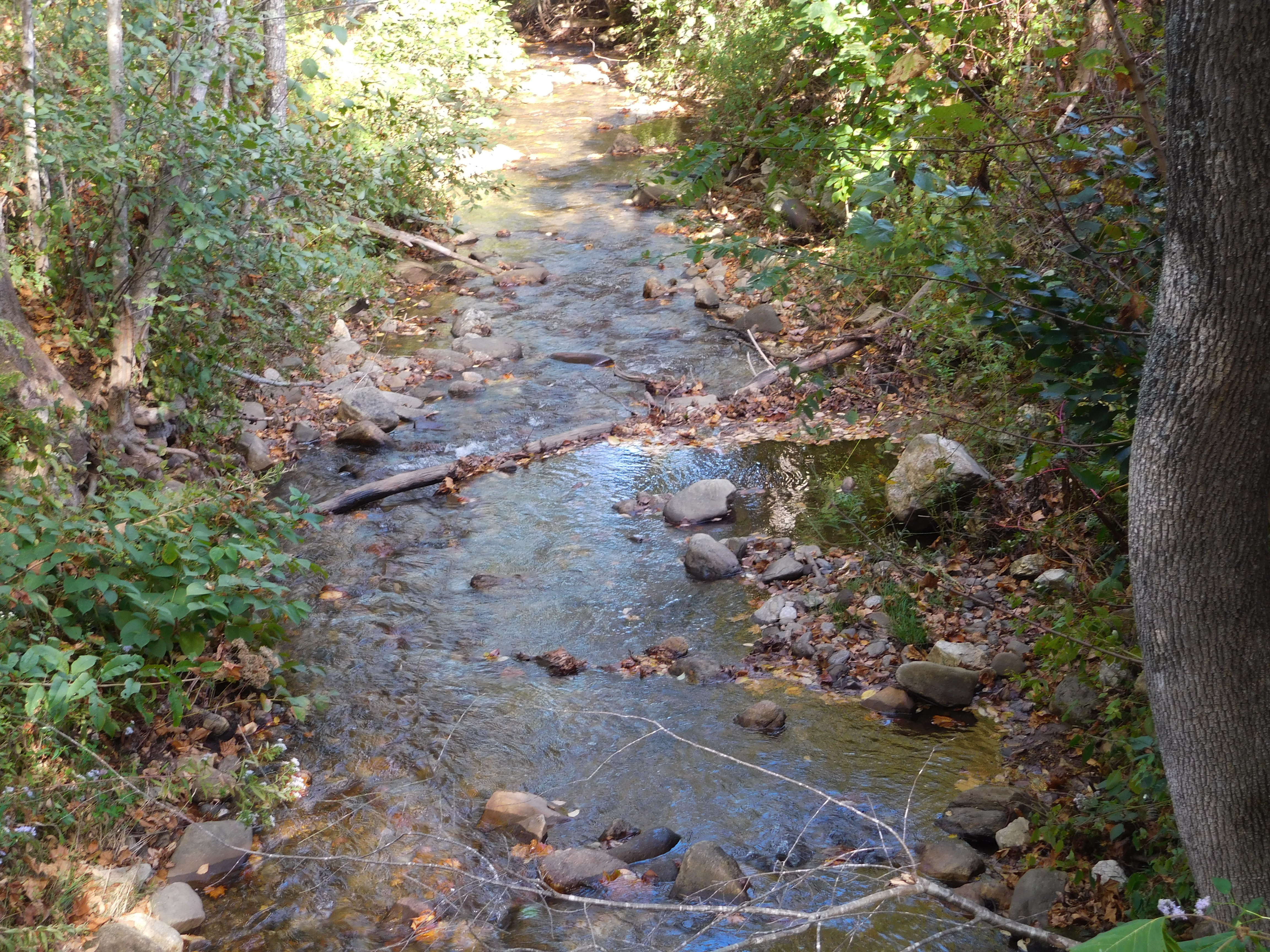 Yancey NC95_003-Clear-Mountain-Stream