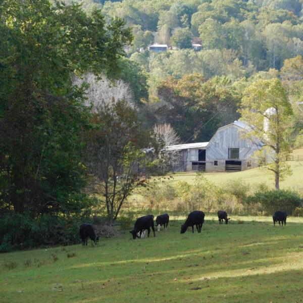 Picturesque Farm With Fenced Pasture And Mountain Stream