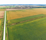 Productive Tillable Acreage In Southern IA