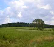 Scenic Hunting Tract With CRP Income And A River Running Through