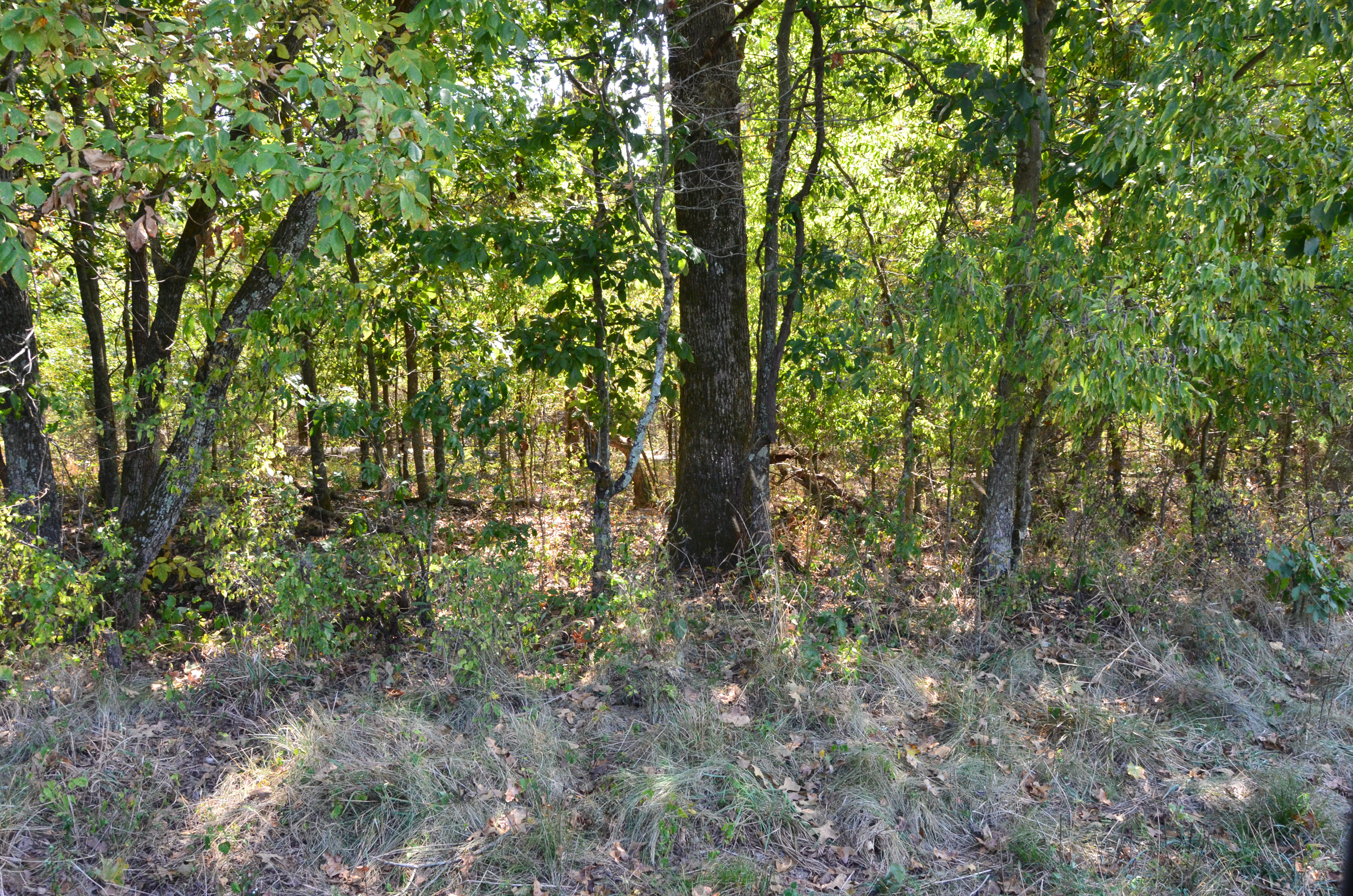 Perry Co MO240 Tract 2 1378