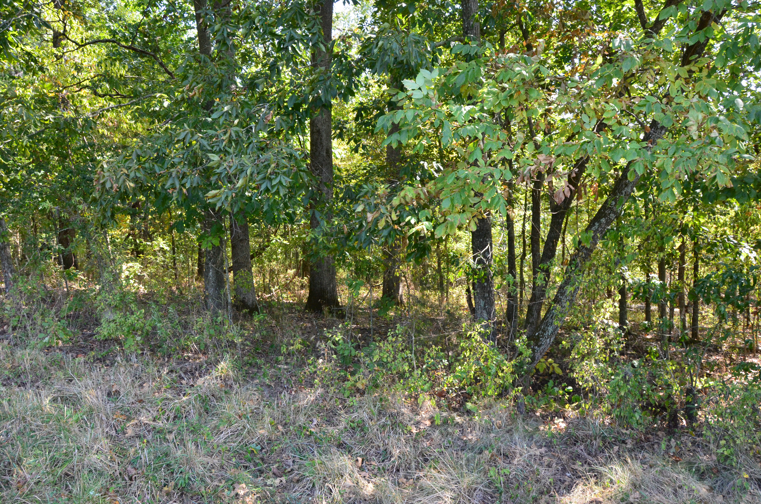 Perry Co MO240 Tract 2 1379