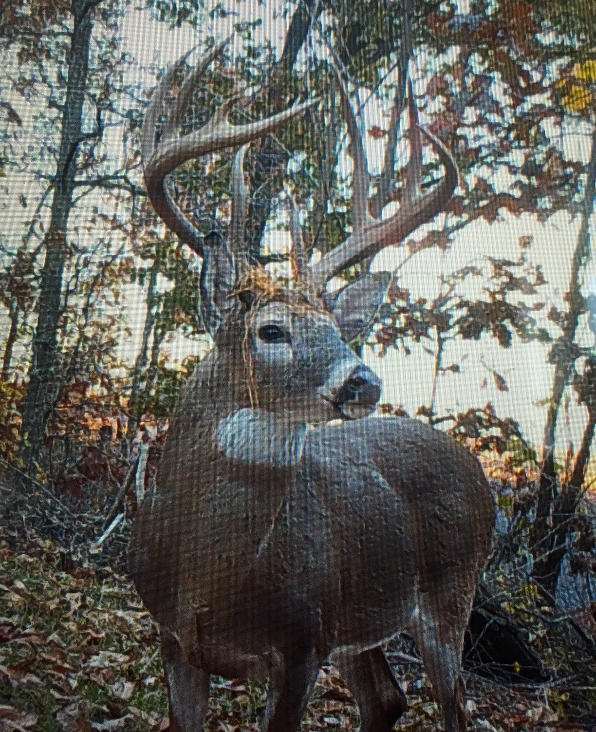 Lewis KY Trail Cam 8