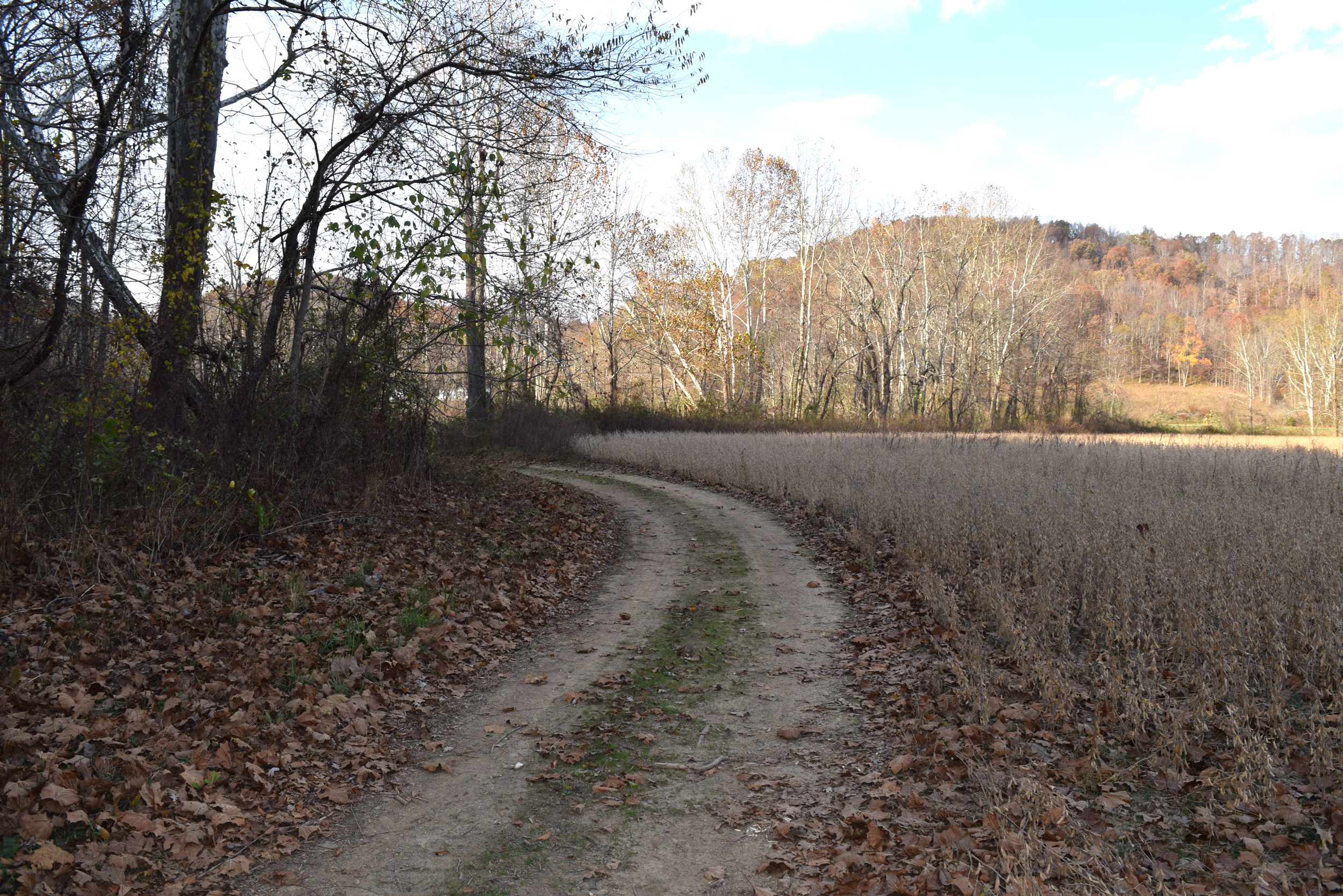 Tract2 Lewis KY809 37