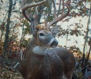 Top-Notch Hunting Property With Tillable And Timber In A Big Buck Area Of Northern Kentucky